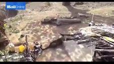 הודי עם מקל מול נמר