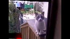 חתולה משוגעת