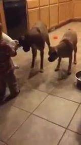 3 כלבים תינוק ולייזר אחד