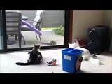 איך חיות פותחות את הדלת