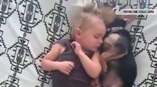 כלבים ותינוקות החברים הכי טובים שיש