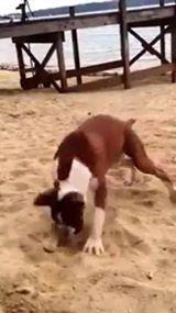 כלב מנסה לימון בפעם הראשונה והוא פשוט מאבד את זה