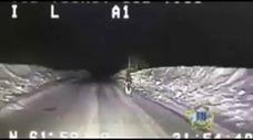 לא תאמינו לאן הכלב הזה מוביל את השוטרים